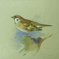 Archibald Thorburn watercolour.  Hammer: £3,000